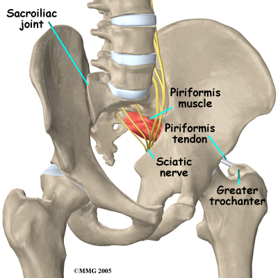 piriformis_anatomy01.jpg