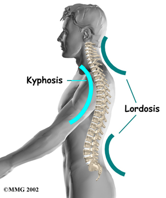 http://patientsites.com/media/img/832/lumbar_anatomy02.jpg